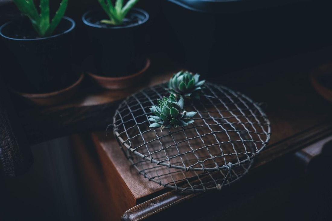 succulent-1030983_1920