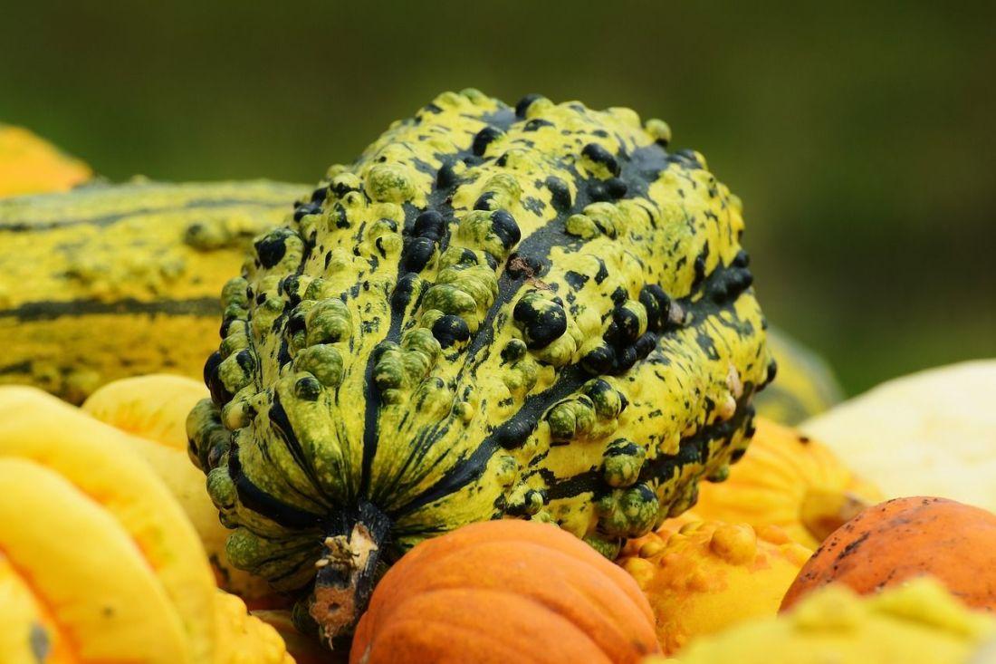 pumpkins-1642231_1280